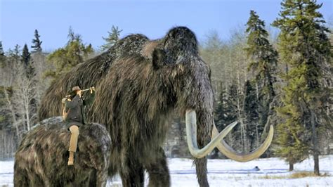 Woolly Mammoth | Andy's Prehistoric Adventures Wiki