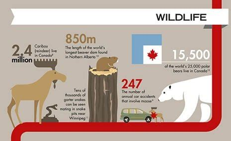 Infographic: 50 Insane Facts about Canada