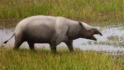 Moeritherium - Facts and Pictures