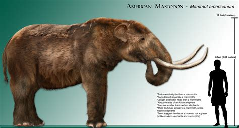 Mammut (Mastodon) - Facts and Pictures